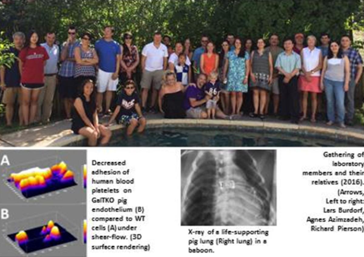 Xenotransplantation Research at the University of Maryland Baltimore
